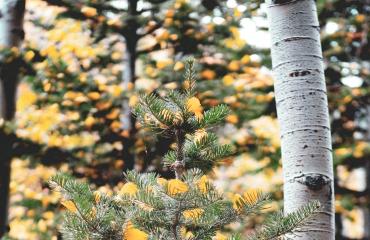 Suberīnskābju saistviela mēbeļu, kokskaidu plātņu un saplākšņu ražošanai